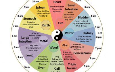 The Chinese Organ Clock